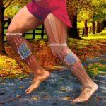 Cómo se transforma la energía (ATP) en movimiento muscular